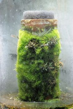 Nano vivarium and cabinets Growing moss & orchids on terra cotta tubes.