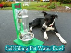 Self-Filling Pet Water Bowl
