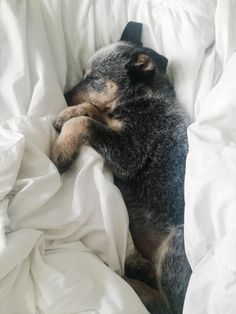 This little fella is so tired all the time ! He is gorgeous ! www.howtopotty-trainadog.com