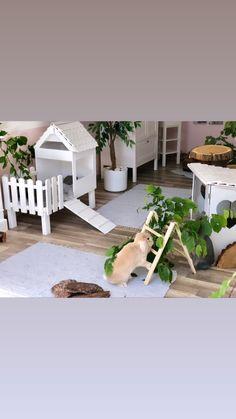 Indoor Rabbit House, Indoor Rabbit Cage, House Rabbit, Diy Bunny Cage, Bunny Cages, Rabbit Cages, Pet Bunny Rabbits, Pet Rabbit, Rabbit Toys
