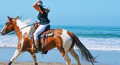 Beach day and a nice gallop across the beach Beach Day, Beach Trip, Adventure Bucket List, Moving To California, New Environment, New Trailers, Horseback Riding, Equestrian, Travel Destinations