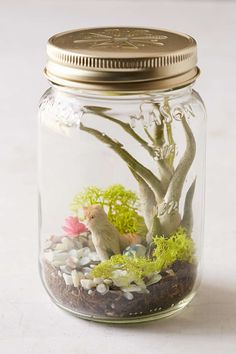 Spitfire Girl Cat Terrarium Kit - Urban Outfitters