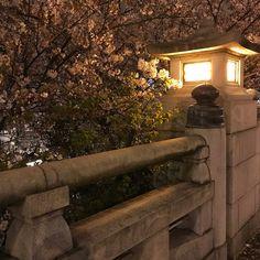Teruyuki Fujiiさん(@teruyuki_fujii)のInstagramアカウント: 「まだ良い感じ🌸 #今日の平和 #PeaceForToday #today #peace #sky #osaka #japan #今日 #平和 #空 #大阪 #日本 #感謝 #より良き未来を…」