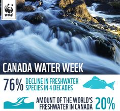 76% decline in freshwater populations. Canada is home to 20% of the world's freshwater