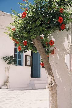 Santorini Beauty by Todd Beltz Photography, via Flickr