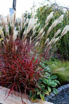 Clematis, Green Grass, Pergola, Yard, Landscape, Flowers, Beautiful, Coach House, Gardening