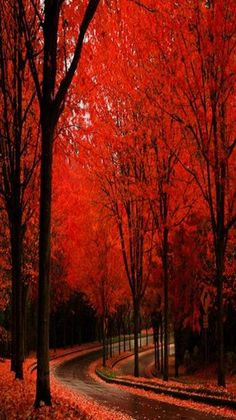 Scarlet in autumn road it doesn't get any better than this