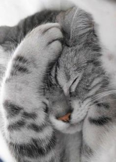 31 Cute Cat Pictures — Adorable Kitten Cats are naturally mischievous animals and very adorable creatures. If you own a cat, you will have a cuddle buddy Cute Cats And Kittens, I Love Cats, Crazy Cats, Kittens Cutest, Ragdoll Kittens, Funny Kittens, Tabby Cats, Bengal Cats, Hairless Cats