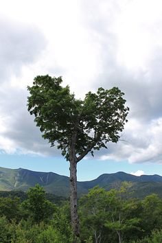 Up in the White Mountains of New Hampshire, you find nature celebrates love in its own way. To those I love I Love Heart, Happy Heart, Where The Heart Is, Heart In Nature, All Nature, Human Nature, Heart Tree, Belleza Natural, Tree Art