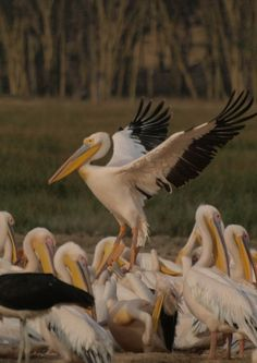 Kenya Tanzania, Kenya, East African Rift, East African Community, Uganda, Bald Eagle, Birds, Animals, Animales