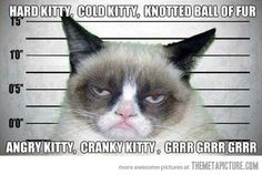 Grumpy cat sings the 'soft kitty' song…