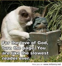 Funny animals with funny sayings .funny animals with funny sayings wallpaper .most popular funny animals seen.funny animals with funny quotes .best funny animals and funny wallpaper . Humor Animal, Funny Animal Quotes, Funny Animal Pictures, Animal Pics, Funny Quotes, Hilarious Pictures, Animal Sayings, Dog Pictures, That's Hilarious