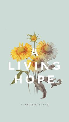 A living hope // mobile bible verse wallpaper by Godsfingerprints.co