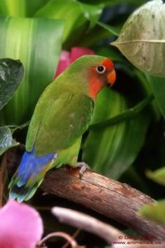 Cute Green Tropical Bird