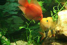Peixinho meu, seduzindo a peixinha angelical.