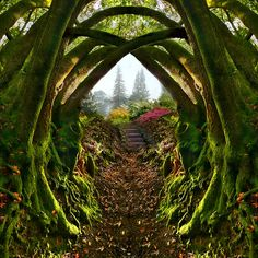 """Entrance to the Secret Garden  (and then I realized, """"this is too symmetrical!"""") nice mirrored filter."""