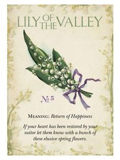 Vintage Language of Flowers. There was a lovely patch of Lily of the Valley in our back yard garden when we moved into our home. No wonder we felt like we would be happy here! Botanical Flowers, Botanical Prints, Flower Meanings, Language Of Flowers, Flower Quotes, Book Of Shadows, Vintage Flowers, Spring Flowers, Planting Flowers