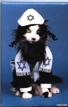 SHALOM CAT! @Heather McCulley @Stefani Schmidt