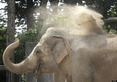 """Koshik The Elephant Can 'Speak' Korean Out Loud, Scientists Say"" -- Fascinating read and video at the click-through."