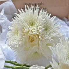 White spider chrysanthemum and single rose
