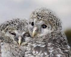 """Owl always be your friend. Owl Facts, Baby Owls, Cute Owl, Nature Animals, Keep Warm, Friends Forever, Beautiful Creatures, Animal Photography, Cute Pictures"