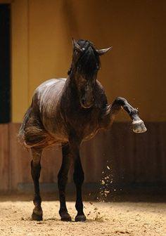 caballos (44).jpg