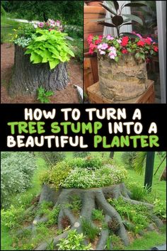 Turn an ugly tree stump into a beautiful planter! Removing tree stumps can be very difficult. If it's not necessary to get rid of them, why not turn them into planters instead? Be inspired by these examples we have for you. Tree Stump Decor, Tree Stump Planter, Ideas For Tree Stumps, Removing Tree Stumps, Short Trees, Stump Removal, Plantation, Garden Planters, Tree Planters