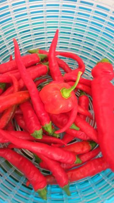 Growing Peppers, Square Foot Gardening, Container Gardening, Vegetable Gardening, Heirloom Tomatoes, Backyard Projects, Garden Planning, Chili, Seeds