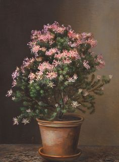 Heather in a Terracotta Pot by Johan Laurentz Jensen, 1843. Oil on cardboard. Painted Vans, Tile Murals, Bunch Of Flowers, Terracotta Pots, Exotic Flowers, Floral Bouquets, Topiary, Pansies, Garden Art