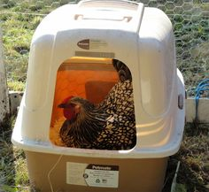 Nest Box Idea Easy Nest Box Idea - hens' favorite laying spot is a cat litter box like this.Easy Nest Box Idea - hens' favorite laying spot is a cat litter box like this. Types Of Chickens, Keeping Chickens, Chickens And Roosters, Pet Chickens, Raising Chickens, Building A Chicken Coop, Diy Chicken Coop, Farm Chicken, Chicken Feeders