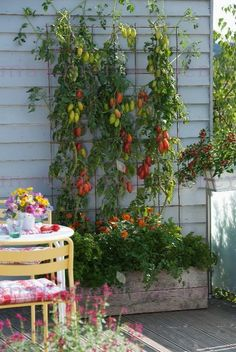 Vegetable garden - from sowing to the harvest