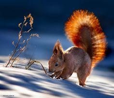 Stunning Animal Portraits By Ukrainian Photographer Sergey - Ukrainian photographer sergey polyushko shoots captivating animal portraits