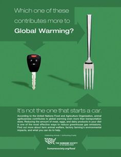 If you're concerned about global warming, choose and support the vegetarian or vegan lifestyle. Animal agriculture has a bigger impact on the climate and health of our earth than oil and gas does. Vegan Facts, Vegan Memes, Vegan Quotes, Why Vegan, Vegan Vegetarian, Going Vegetarian, Vegetarian Breakfast, Vegetarian Dinners, Animal Agriculture