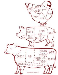 cow, pig, chicken butcher diagram chart illustration |illustration by Ariel choi