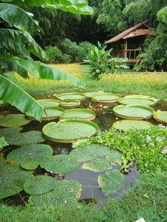 Ressourcez-vous à la #Bambouseraie de Prafrance au cœur d'un univers #végétal et #zen où tous les éléments de la #nature sont réunis pour un moment de #détente en #famille ou entre #amis. Plus d'infos par ici : http://www.tourismegard.com/la-bambouseraie-de-prafrance-reseau-meli-melo/generargues/tabid/564/offreid/2aef83ec-5316-45ca-8bd9-b9fbec57bc9f/detail