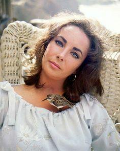 Elizabeth Taylor                                                       …