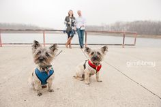 Bring your puppies! // dogs and engagement sessions // © gntphoto.com