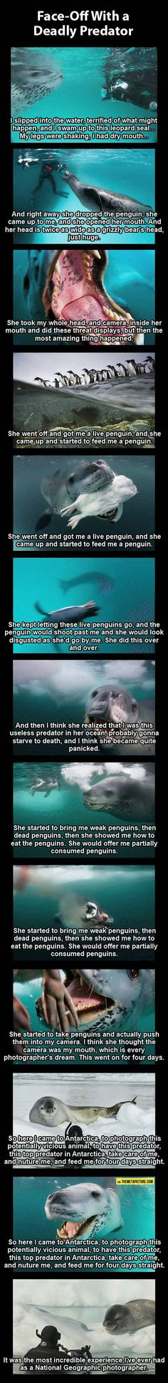 Photographer vs. deadly leopard seal…