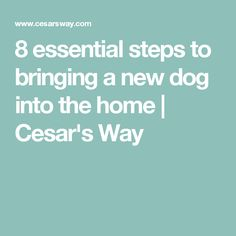 8 essential steps to bringing a new dog into the home   Cesar's Way
