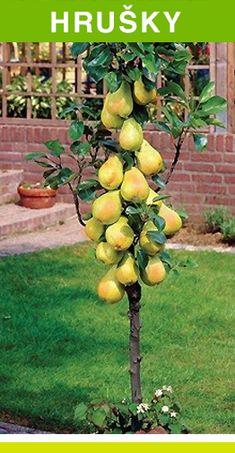 Fruit Vert, Plantar, Plantation, Bordeaux, Wood Trunk, Vases, Garden, Fruit Picking, Growing Fruit Trees