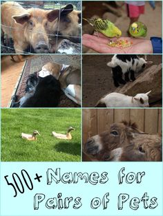 Whether you are getting dogs, cats, or another set of pets, here are clever and funny names for pairs of pets. Clever Dog Names, Funny Cat Names, Cute Names For Dogs, Kitten Names, Cute Dogs, Cute Animal Memes, Cute Animal Videos, Cute Animal Pictures, Pet Names For Girls