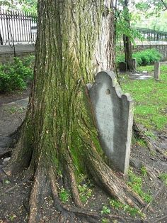 Tombstone out of a tree.-life-goes-tree-growing-over-tombstone. Old Cemeteries, Graveyards, Cemetery Art, Cemetery Monuments, Life Goes On, Abandoned Places, Mother Nature, Creepy, Scenery