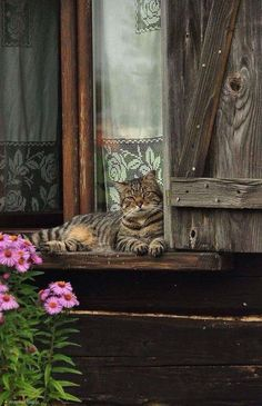 Kitty Happy Place - Ana Rosa