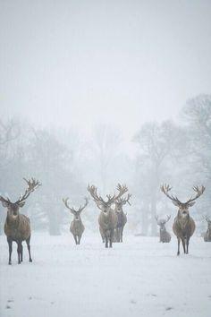Reindeer!
