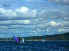 "Viper sporting a purple spinnaker at the ""Wivenhoe Winter Marathon for Catamaran, Viper, Marathon, Sailing, Mountains, Purple, Nature, Travel, Candle"