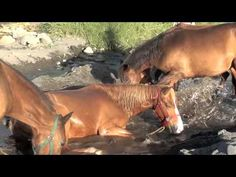 Carolyn Resnick - The First Lesson We Learn from Horses - video by Stina Herberg