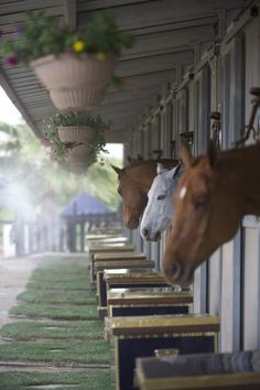 I love all the tack trunks by each horse's stall