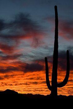 Saguaro sunset, Organ Pipe National Monument, Pima County, Arizona