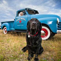 Labrador Retrievers. {Pet Photography}