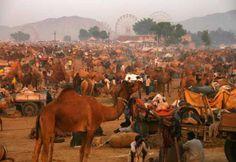 ARTICLE - Inde, Pushkar-Fair : La foire aux bestiaux